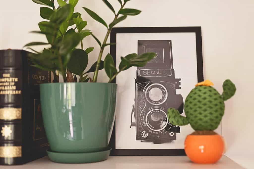 a personal shelf with a plant and a photo