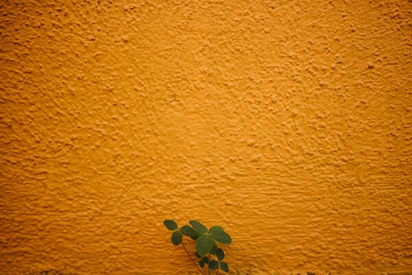small green plant in front of a yellow wall