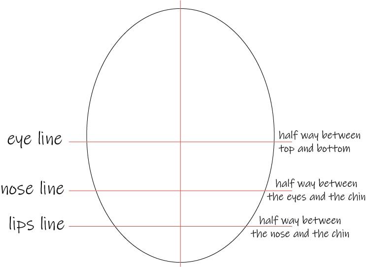 face proportions dividing lines