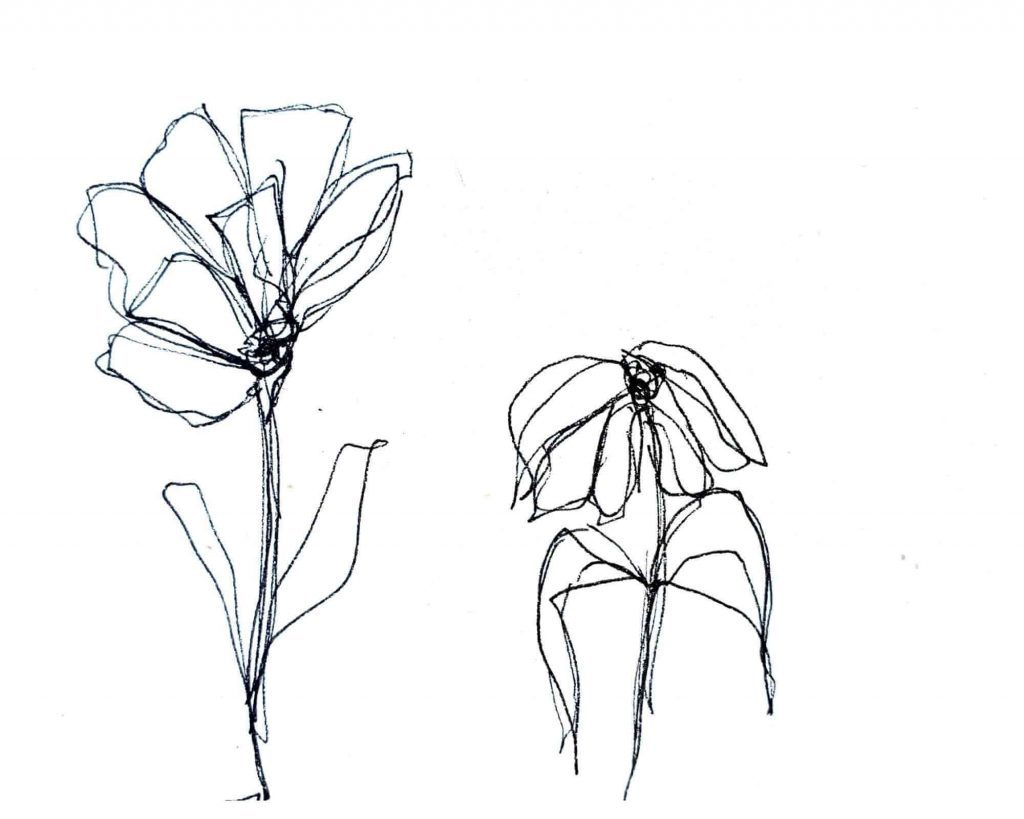 two flowers drawing